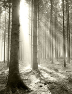 Theodore Edwards